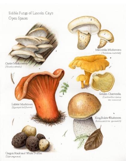 Mushrooms 8-10-17